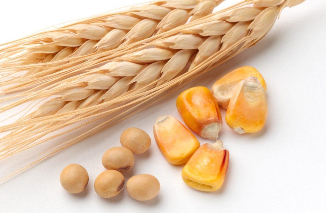 Corn, Wheat, and Soybean